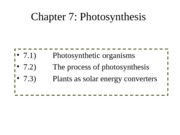Chapter 7 - Photosynthesis