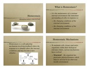homeostasis slides SL Biology