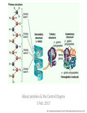 2.3 About proteins and the Central Dogma.pptx