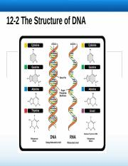 12.2 Structure of DNA.ppt