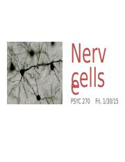 3-Nerve_cells notes