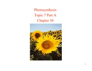 Topic 7 Part A - Photosynthesis S10 1pp