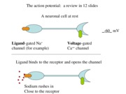 Action potential-1
