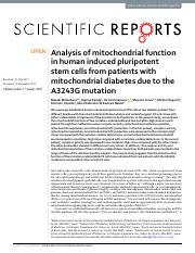 Analysis of mitochondrial function in human induced.pdf