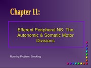 Chapter 11 Efferent Division