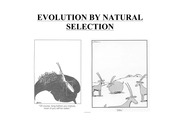 03_Evolution_by_natural_selection.1