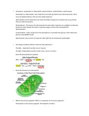 photosynthesis lab.docx
