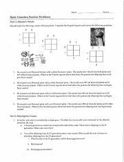 Genetics problems with answers.pdf - ANSWER KEY Basic ...