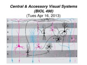 20 -Tues Apr 16 - B490 Central & Accessory Visual Systems