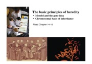 LSCI1002 -2012-09-27 Basic principles of heredity(1)