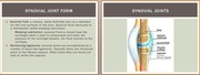 Human Joint Form and Function Presentation-Synovial Joints
