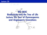 Lecture on Tour of Gymnosperms and Angiosperm Innovations