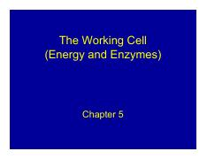 Chapter 5 ( enzymes)