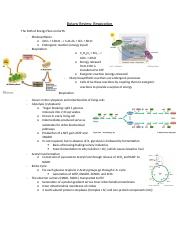 Botany Review - Respiration .docx