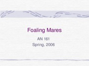 Foaling Mares