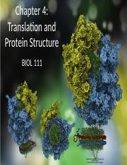 Chapter 4 Translation and proteins Student