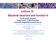 Lecture 16 (Bacterial structure and function II)