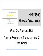 14_Protein Synthesis