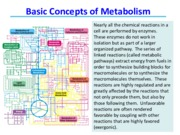 Lecture 14 Basic Concepts of Metabolism - class