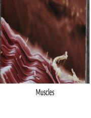 GCL Structures 1 Muscle presentation.pptx