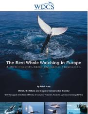 whale-watching-in-europe