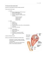 Anatomy Review 2- Chapter 6.docx