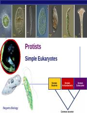 protists and fungi.pptx
