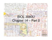 Chapter 14 - Part 2 - Gluconeogenesis - Annotated