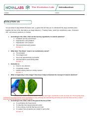 NOVA_Evolution_Lab_Worksheet.docx - The Evolution Lab NAME ...