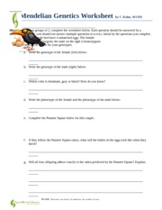 Mendelian Genetics Worksheet And Answer Key: Mendelian Genetics Worksheet   Mendelian Genetics Worksheet by C    ,