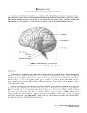 Laboratory 01 - Brain Anatomy.pdf