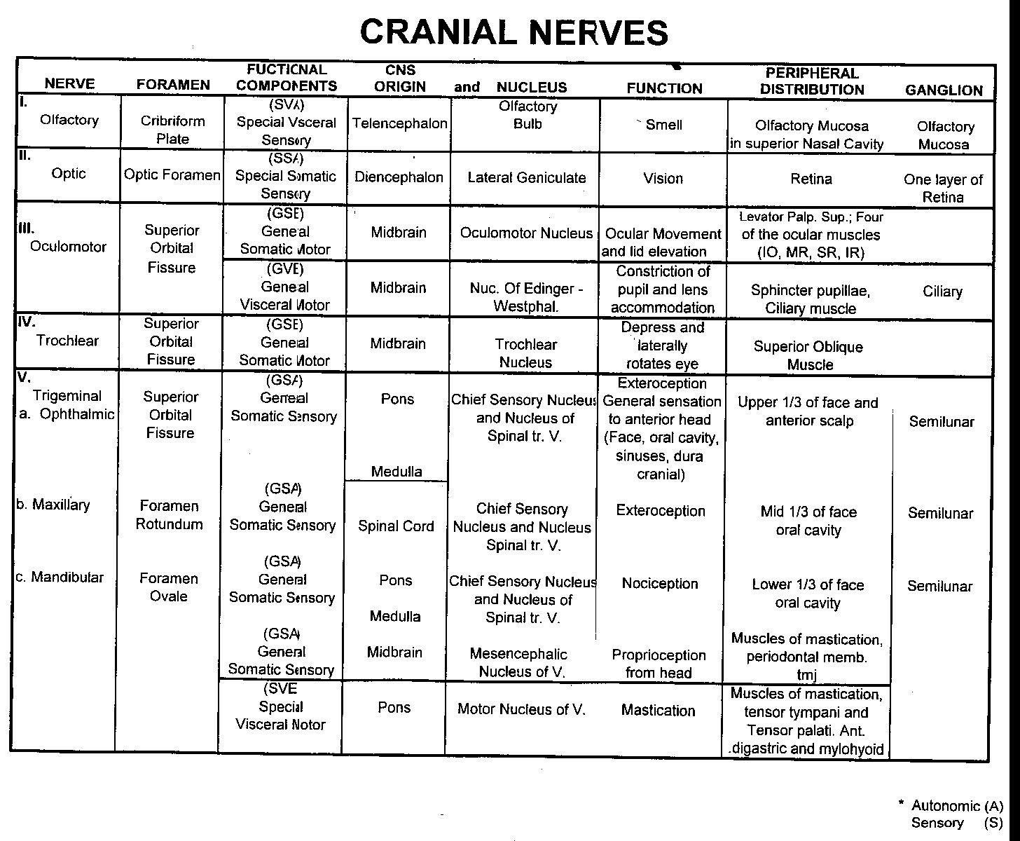 ANAT 2626 Cranial Nerve Detailed Spreadsheet 1