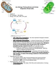 photosynthesis_cellrespir_sg_biohonors_2016.pdf