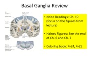 Review_2_BasalGanglia