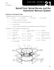 chapter 8 special senses worksheet answers