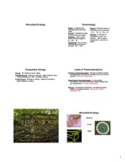 04 Microbial Ecology