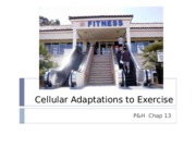 6. Chap 13 - Cellular Adaptations to Exercise