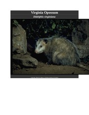 Virginia Opossum Notes