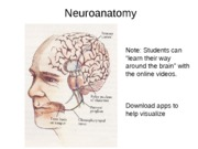 Neuroanatomy for BB