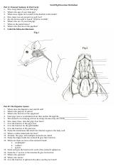 Fetal Pig Dissection Worksheet   Siteraven additionally pig day 2 1 2012 2013 Answers   Part 2 1 Fetal Pig Dissection Name in addition Worksheets to  plete w  Dissection also  further Fetal Pig Dissection Worksheet 1   High lab   Human anatomy moreover Fetal Pig Dissection Lab likewise pig dissection worksheet   Siteraven in addition Pig Parts Diagram New Fetal Pig Dissection – wiring diagram in addition 11 Best Fetal pig Dissection images   Life Science  body additionally Pig Digestive System Diagram Labeled Unique 38 Fetal Pig Dissection besides Fetal Pig Dissection Workbooklet With Fetal Pig Dissection Worksheet further Fetal Pig Diagram with Labels ly 38 Fetal Pig Dissection moreover Fetal Pig Dissection Guide together with  likewise Fetal Pig Dissection and Fetal Pig Anatomy   BIOLOGY JUNCTION likewise Fetal Pig Dissection Worksheet. on fetal pig dissection worksheet answers