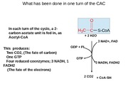 CHEM 3320 The Citric Acid Cycle 2