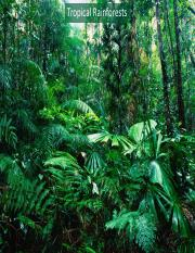 10 Tropical Rainforests