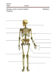 Skeleton Diagram.docx