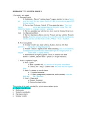 Anatomy 215 Male Reproductive System 2 Notes