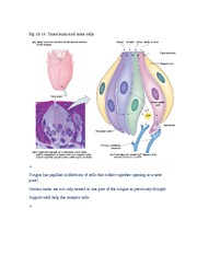 Chapter 10 Sensory Systems Part 2