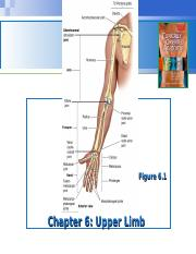 Lecture 8 - Forearm & Had.ppt
