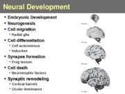 Lecture 9-development and hormones