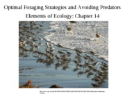 Lecture 17-Optimal foraging