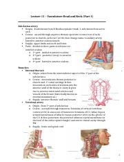 Lecture 11 – Vasculature Head and Neck