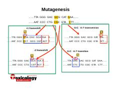 Lecture 10 mutagenesis slide